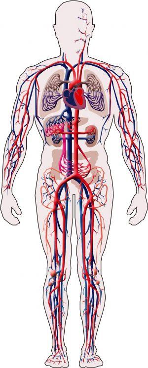 saude-vascular
