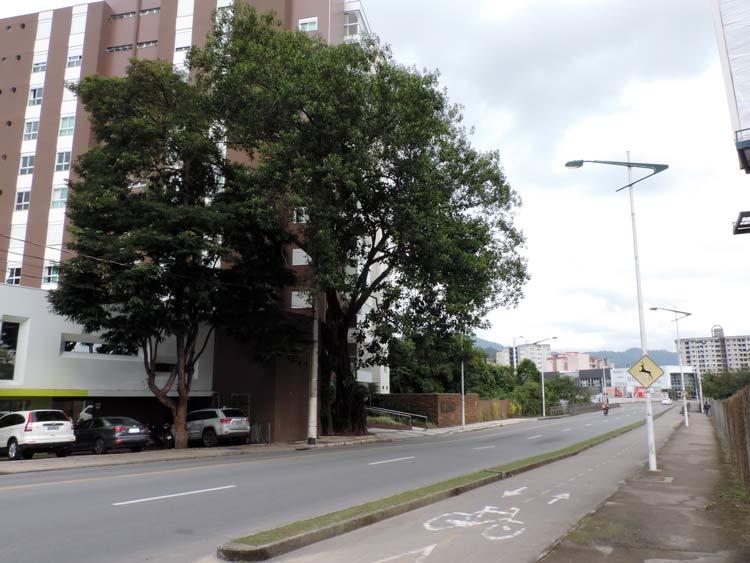 Figueira_R-Heinrich-Hosang_04