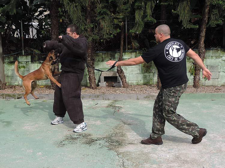 Treinamento cachorro (1)