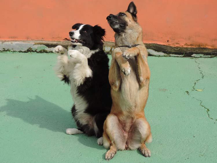 Treinamento cachorro (10)