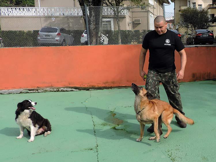 Treinamento cachorro (11)