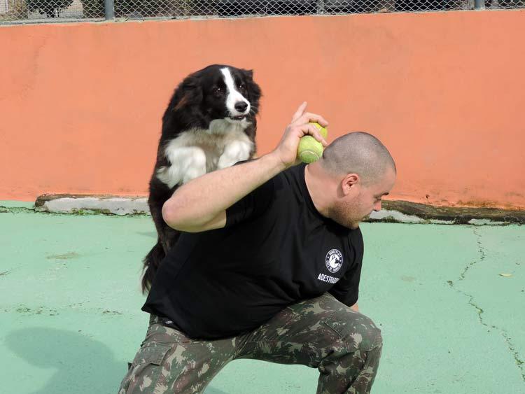 Treinamento cachorro (12)