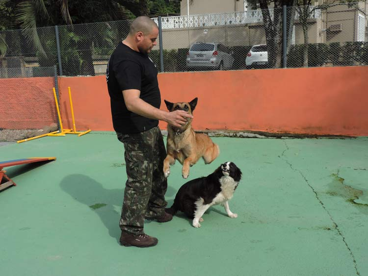 Treinamento cachorro (14)