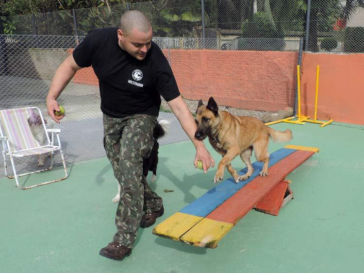 Treinamento cachorro (15)