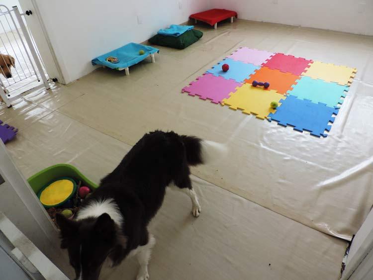 Treinamento cachorro (16)