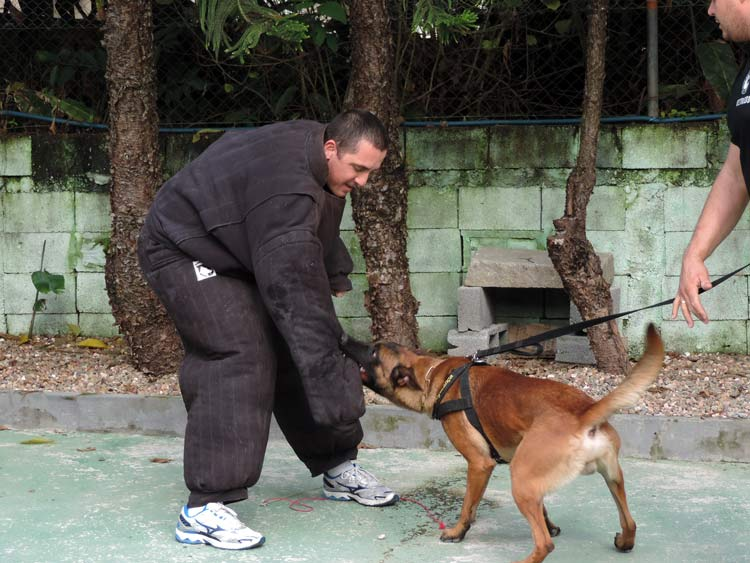 Treinamento cachorro (3)