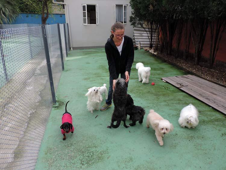Treinamento cachorro (9)