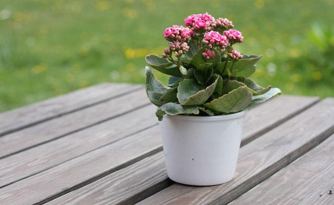flores-em-vasos