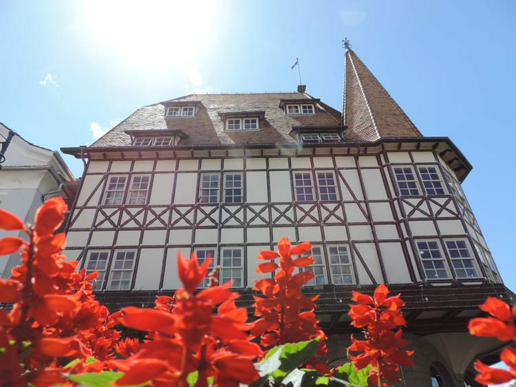 Castelo-Havan-flores