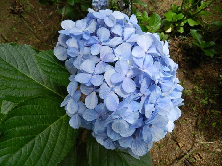 Flores_03