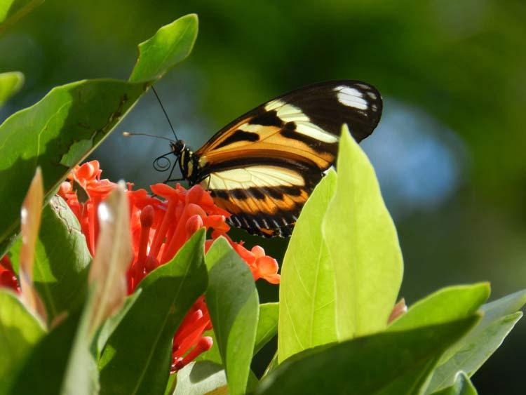 flores-borboleta_01
