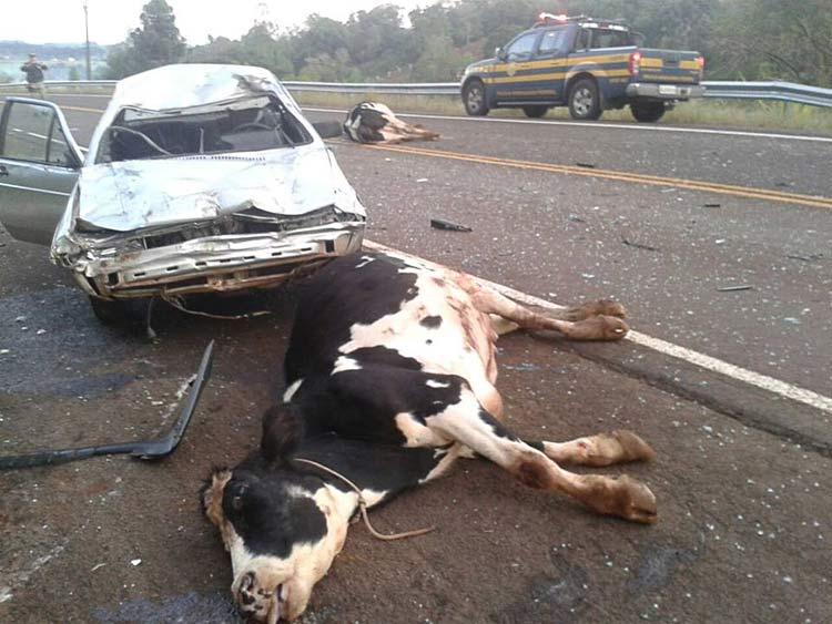 Vacas-atropeladas_22-6-15_01