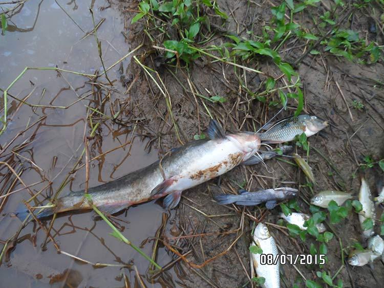 Peixes-Mortos_ETA2_03