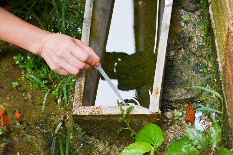 Coleta-Dengue-agua