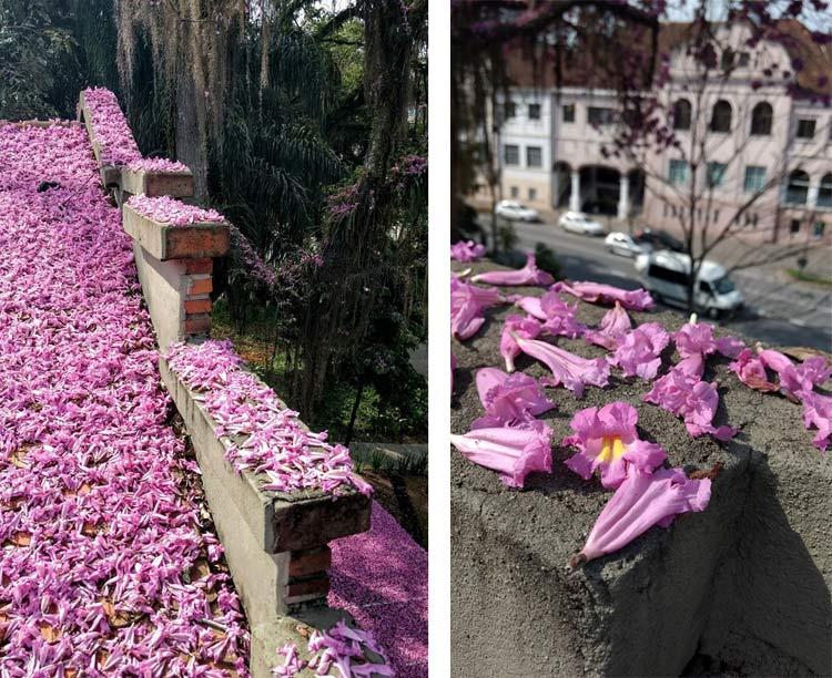 Flores-telhado_Tapyoca_6-8-16_02