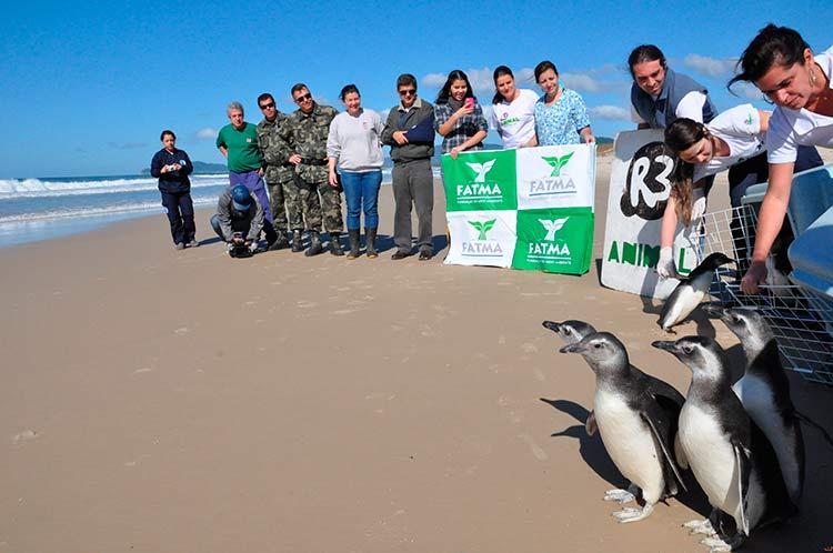 Pinguins_FATMA_Floripa_24-8-16_01