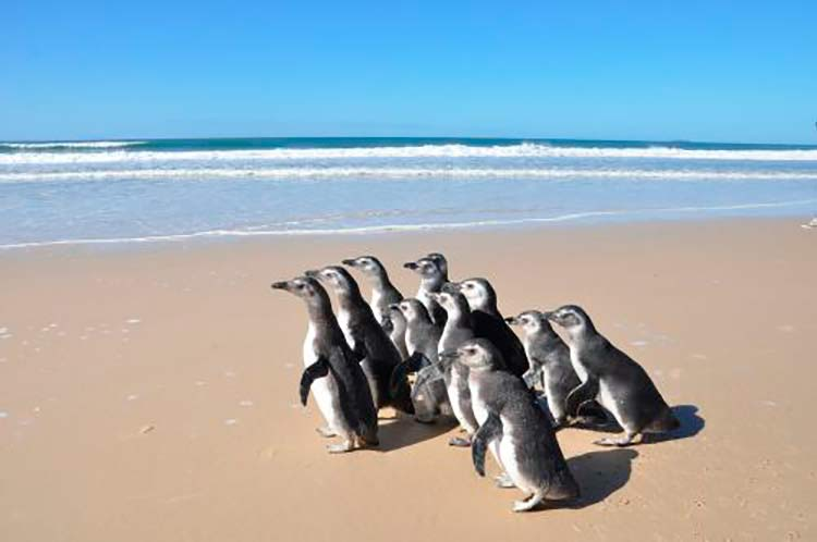 Pinguins_FATMA_Floripa_24-8-16_02